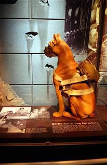 Vittles der Hund mit Fallschirm im Blog 365 Dog Heroes